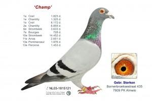 "NL03-1815121 ""Champ"""